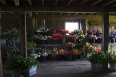 Floret flower farm. Hundreds of flowers waiting in the barn