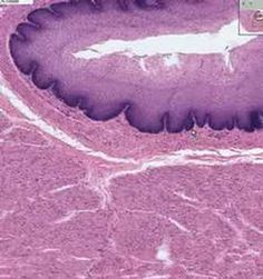 Shotgun Histology Esophagus - YouTube