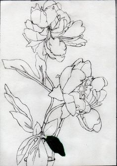 Pencil Drawing Of Flowers by Issycap.deviantart.com