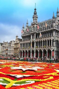 Brussels Flower Carpet - Ultimate Guide for Your First Visit