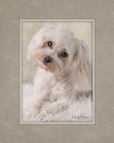 Pet Photography, Pets, Animals, Animals And Pets, Animales, Animaux, Animal, Animais