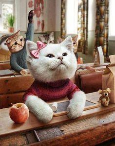 kittenschool...