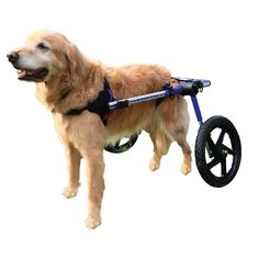 Dog Wheelchair Med - Foam Tire - Dogs 70lbs+  | Walkin' Wheels dog wheelchair enables your dog or other pet to run and play again; get the exercise he or she needs, and live a happy, healthy life. Walkin' Wheels is a veterinarian approved canine cart designed to help pets with hip and leg problems including degenerative myelopathy (DM), hip dysplasia, arthritis, paralysis, slipped disc, spinal and neurological problems, surgical recovery, and more