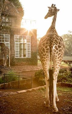 Discover the wilderness of Kenya with exploration tours organized by The Safari Collection.!