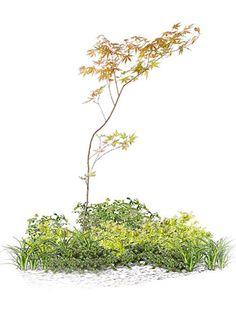 和の要素をとり入れた庭02 Tree Photoshop, Photoshop Images, Grass Photoshop, Landscape Art, Landscape Architecture, Landscape Designs, Rendering Drawing, Small Japanese Garden, Plant Design