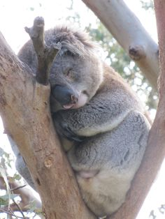 Melbourne, Australia Places Ive Been, Places To Go, Melbourne Australia, Bears, Faces, School, Cute, Travel, Animals