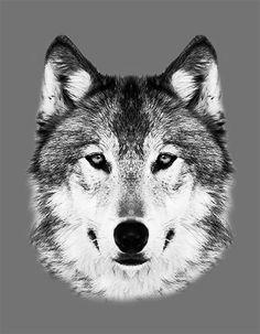 Wolf illustration - serigrafia 2 tintas