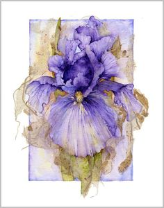 Cet iris de Jan Harbon est éclatant. Cette façon de laisser le sujet sortir par-dessus le passe-partout lui apporte un effet de profondeur que j'affectionne particulièrement.