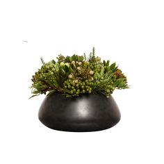 11″ H x 16″ W MIXED PROTEA/SEDUM IN BLACK BOWL Flower Vases, Flower Art, Flower Arrangements, Chinese Flowers, Black Bowl, Ikebana, Flower Decorations, Planting Flowers, Beautiful Flowers