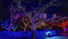 Take an evening stroll through the majestic oaks lit up for the holidays at the Houston Zoo during Zoo Lights Houston 2014, open through Sunday, January 4, 2015.