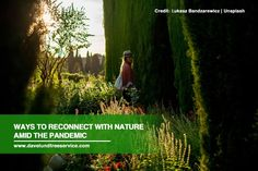 You don't need to go far to spend time in nature; your own yard will give you the stress relief you need. Below are some tips to recharge in nature during the pandemic.