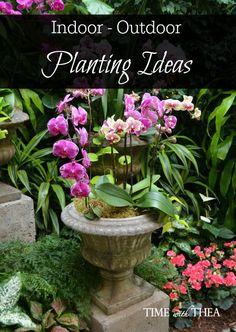 Indoor Outdoor Planting Ideas