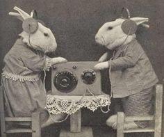 Rabbits Listening to the Radio