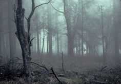 Crowpaw opened her eyes to the dark, dead and rotting smell of decay coming from the mist filled Darkforest. Blinking her eyes a few times, she sat up straight and then stood as she began to walk around. Crowpaw made her way down to a clearing in the forest and saw you there, waiting for her. (Open Roleplay)