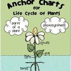 Plant Life Cycle Anchor Charts {FREEBIE}