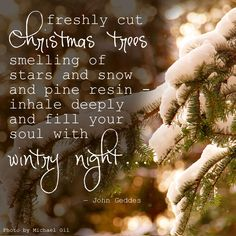 """""""...freshly cut Christmas trees smelling of stars and snow and pine resin - inhale deeply and fill your soul with wintry night..."""""""