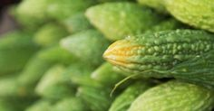 TuSalud.Info: La planta que mata el 98% de las células cancerosas y revierte la diabetes!