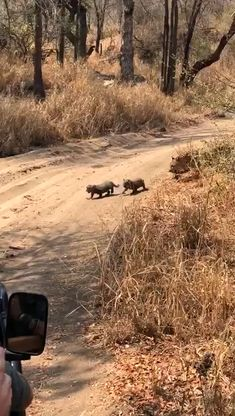 Mom says no! - Carmen Evers - Mom says no! Cute Little Animals, Cute Funny Animals, Cute Cats, Big Cats, Funny Cats, Nature Animals, Animals And Pets, Wild Animals, Nature Gif