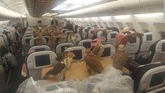 Falcons on a plane: First class treatment for birds of prey - CNN.com
