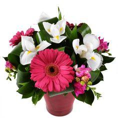Миниатюрный, праздничный, оригинальный букетик для милой молодой женщины, которой нравятся современные композиции из цветов. Белые ирисы и малиновые герберы смотрятся задорно и нарядно. А что может быть лучше, если вам нужно поздравить сестричку с Днем рождения или подругу с 8 Марта!