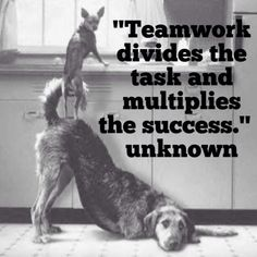 Work Quotes : Teamwork divides the task and multiplies the success. Team Bonding Corporate T Inspirational Teamwork Quotes, Motivational Quotes For Workplace, Workplace Quotes, Leadership Quotes, Team Quotes Teamwork, Teamwork Quotes Motivational, Motivational Posters, Teamwork Slogans, Teamwork Funny