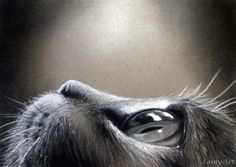 Cat's Eye. Animal Charcoal Portrait Drawings. By Alaina Ferguson.