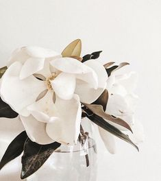 Lovely white magnolia, white an fresh green color inspiration. Flower Aesthetic, White Aesthetic, Cactus Y Suculentas, Magnolias, Planting Flowers, Floral Arrangements, Beautiful Flowers, Wedding Flowers, Bouquet Wedding