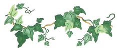 Quickly and easily create a unique natural looking design in your home with our Elegant Ivy Painting Stencil!