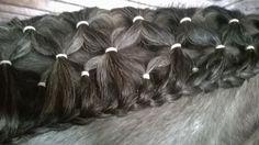 horse hair 10