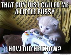 Lolcats - head shot - lol at funny cat memes - funny cat pictures Funny Captions, Funny Cat Memes, Funny Cat Videos, Funny Animal Pictures, Funny Cats, Funny Animals, Cute Animals, Silly Cats, Animal Memes