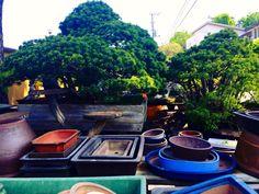 Saitama Saitama, Bonsai, Japanese, Japanese Language, String Garden