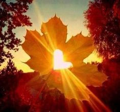 Heart In Nature, Heart Art, Fall Pictures, Nature Pictures, Autumn Photography, Creative Photography, Fall Wallpaper, Wallpaper Backgrounds, Wallpapers