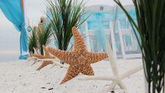 White starfish, brown sugar starfish and grasses alternate