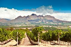 The wine region of Stellenbosch, Cape Town, South Africa Best Places To Travel, Oh The Places You'll Go, Places To Visit, O Canada, South African Wine, Cape Town Hotels, Saumur, Paris 3, Sites Touristiques
