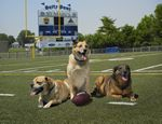 Browzer, Jasmine & Rhett:  For good health - don't sit on the sidelines - get in the game!