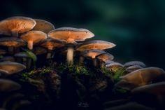 Mushroom City by Flávio Silva on Light Painting, Stuffed Mushrooms, City, Pictures, Stuff Mushrooms, Cities