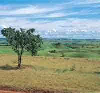Región de contacto entre la altillanura plana y la disectada o colinada. Alto de Menegua, Meta.