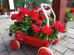 Flowers in Strömsö