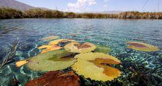 Esta fascinante maravilla de la naturaleza destaca por la belleza de sus aguas azul turquesa, siendo además hogar de flora y fauna endémica de gran valor científico.