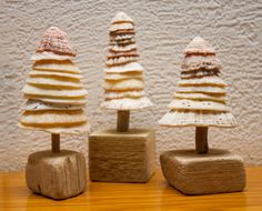 Small Limpet shell trees on driftwood. Driftwood Christmas Decorations, Driftwood Christmas Tree, Beach Christmas, Christmas Love, Christmas Crafts, Christmas Ideas, Xmas, Christmas Ornaments, Sea Crafts