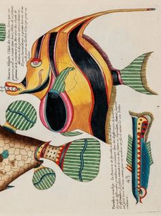 Louis Renard (1678/9-1746), 1718-19, Detail: Poissons, Écrevisses et Crabes (Fishes, Crayfishes, and Crabs), Amsterdam. Illustrations were drawn by Samuel Fallours, an artist employed by the Dutch East India Company.