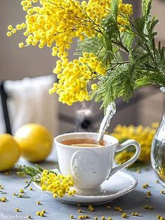 Good Morning Love Quotes For You to Life Sayings - The Quotes Good Morning Coffee Gif, Good Morning Love, Good Morning Inspirational Quotes, Good Morning Quotes, Tea Gif, Le Mimosa, Tout Est Possible, Mimosas, Coffee Love