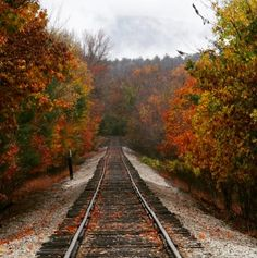 17 Stunning Photos Of Fall Foliage To Warm Your Soul