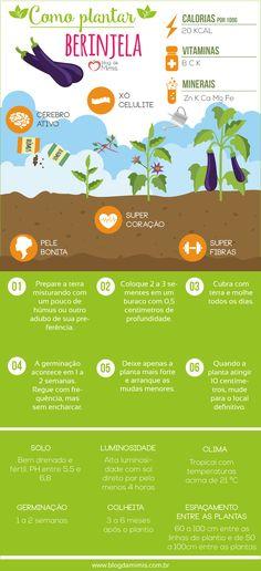 Como plantar berinje