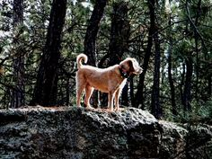 Barkley on a boulder