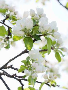 spring promise .. X ღɱɧღ