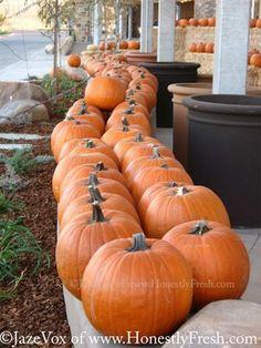 Parade of Halloween Orange PUMPKINS