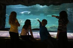 Explore marine life at Sea Life Caverns — an underground aquarium that is home to more than 100 species of fish, sharks, sea turtles, penguins, reptiles, amphibians and invertebrates.