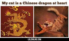 Dragon Cat