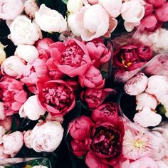 bouquets and bouquets of peonies